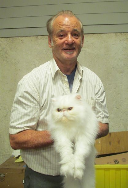 bill-murray-cat.jpg