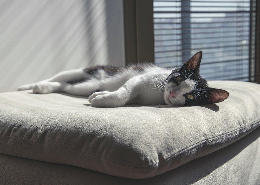 cat-736455_1280.jpg