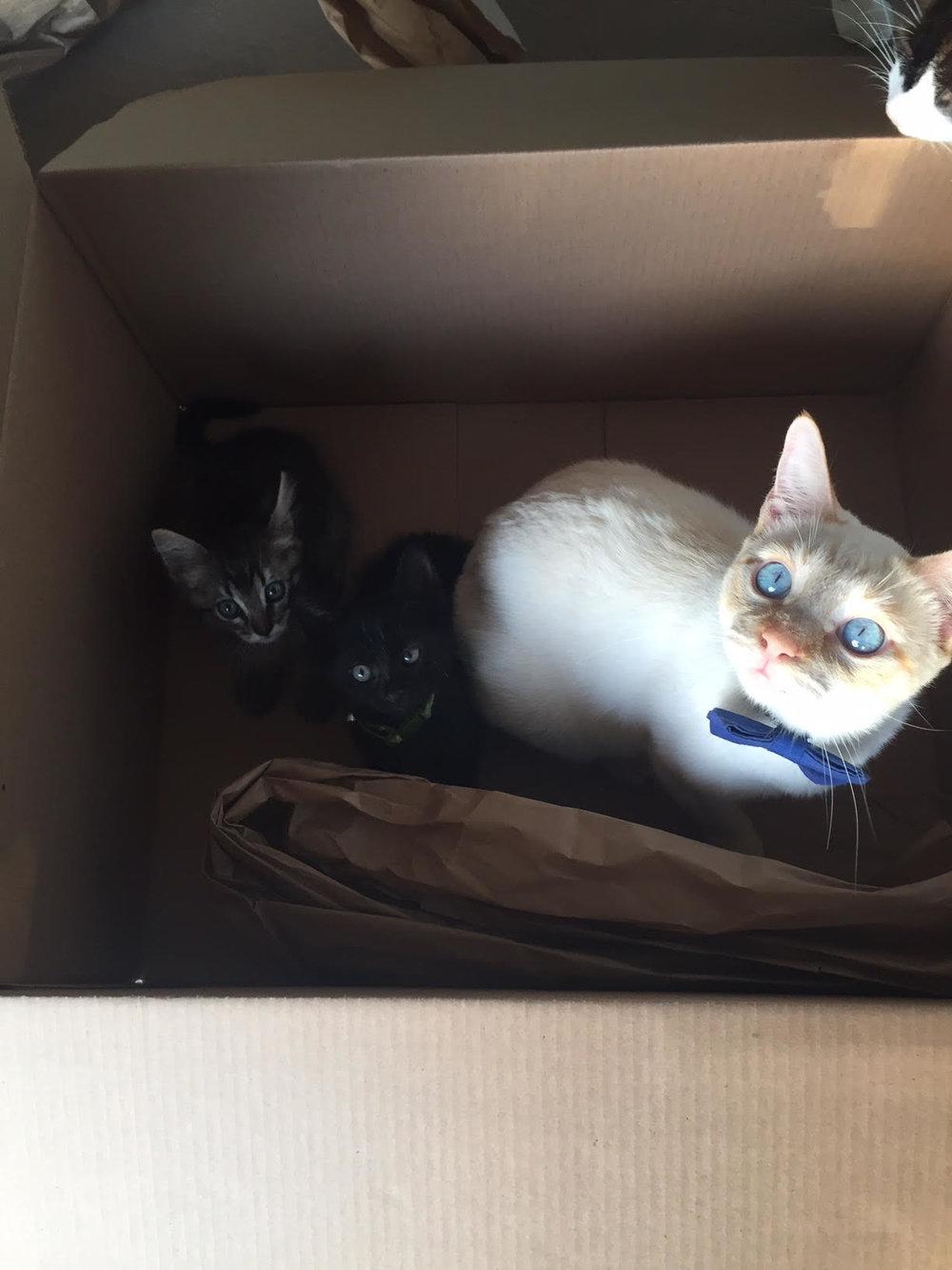 BOX PAWTY!!!!