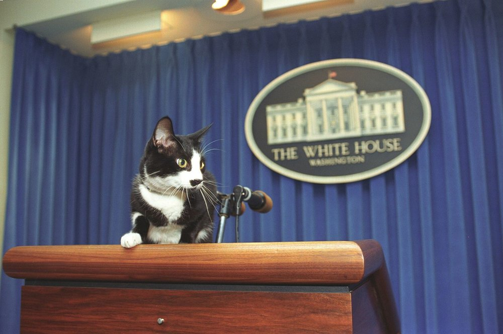 Photograph_of_Socks_the_Cat_Standing_on_the_Press_Podium_in_the_Press_Room_at_the_White_House-_12-05-1993_6461507039.jpg