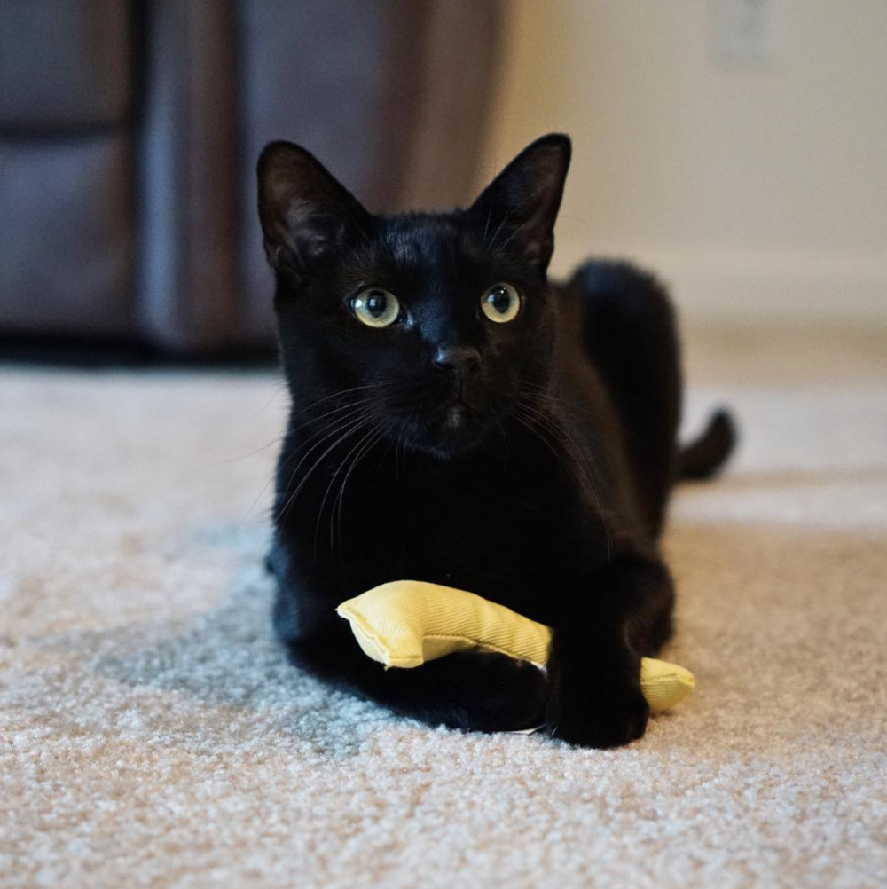 You show me a cat who doesn't like a catnip banana and I'll show you a ….. LIAR!!!!!