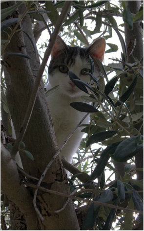 Adorable cat hanging out in an olive tree