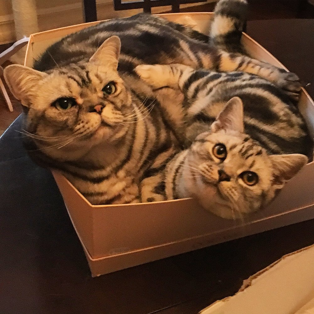 We love this box more than anything. Literally.