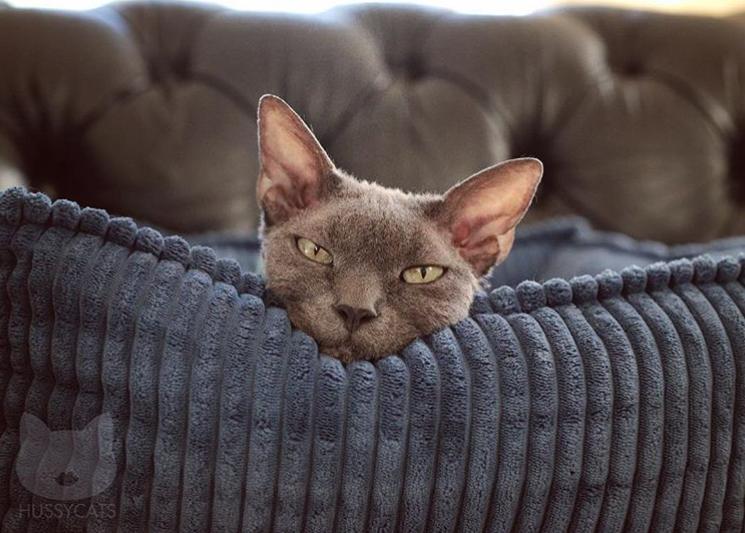 @hussycats