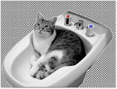 CatBidet.jpg