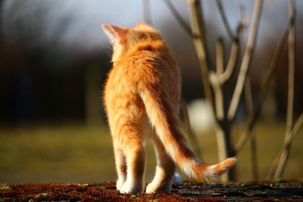 cat-1183139_1920.jpg