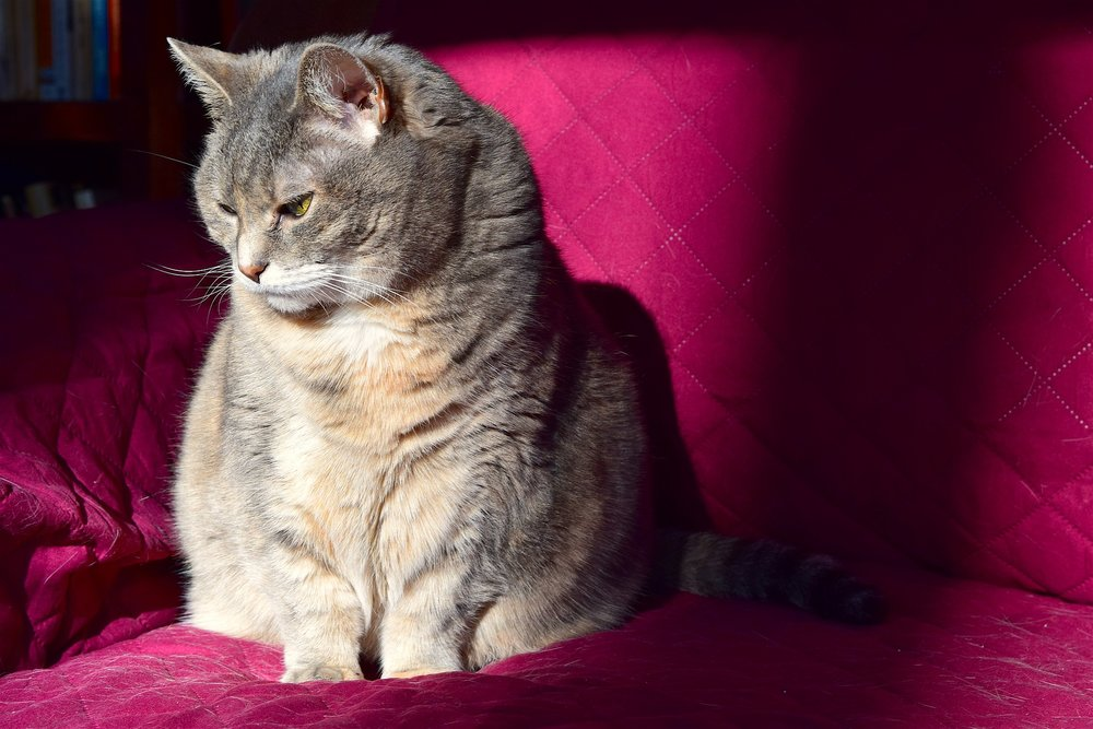 cat-1932241_1920.jpg