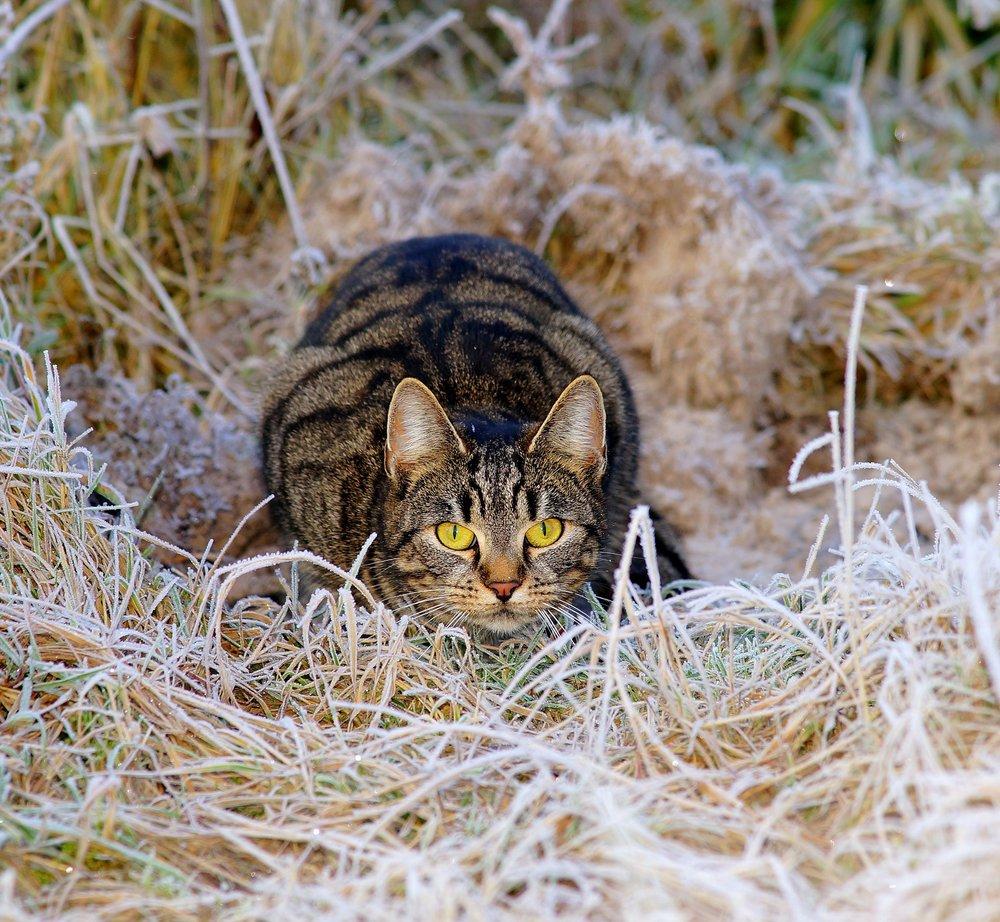 cat-1940489_1920.jpg