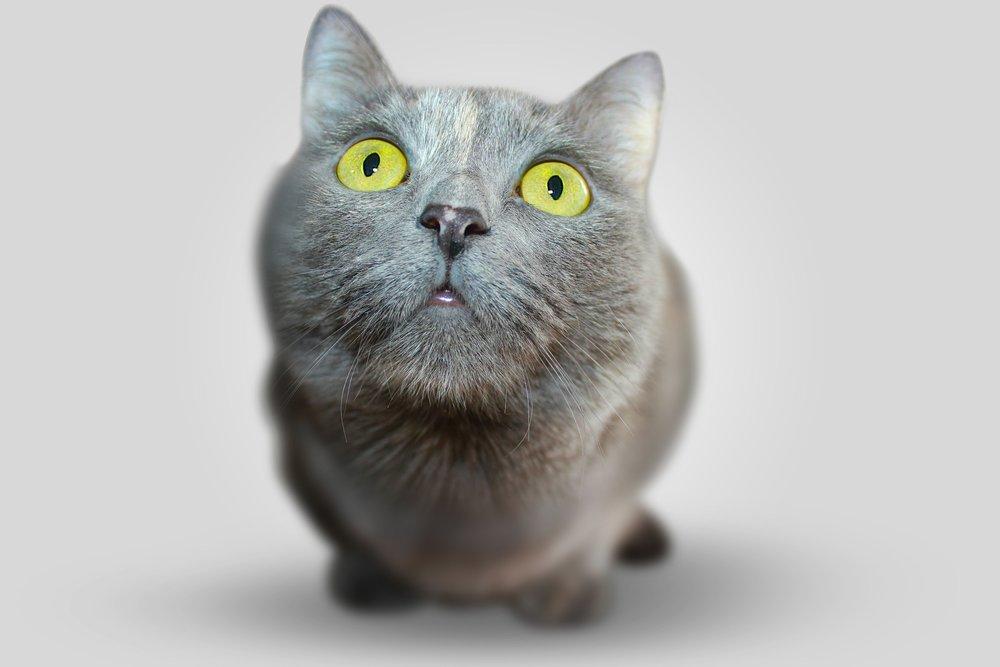 cat-351926_1920.jpg