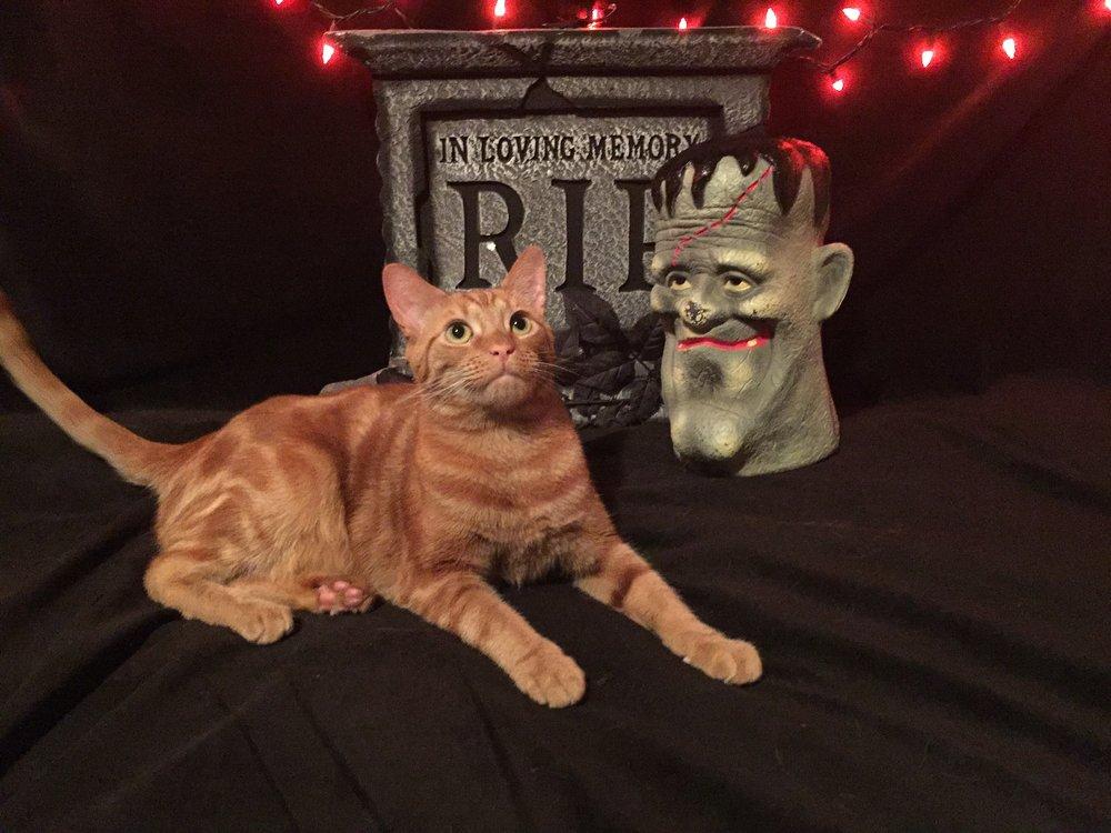"""""""Heya, Ma! I'll put on a costume for some treats – whaddya say?!"""""""