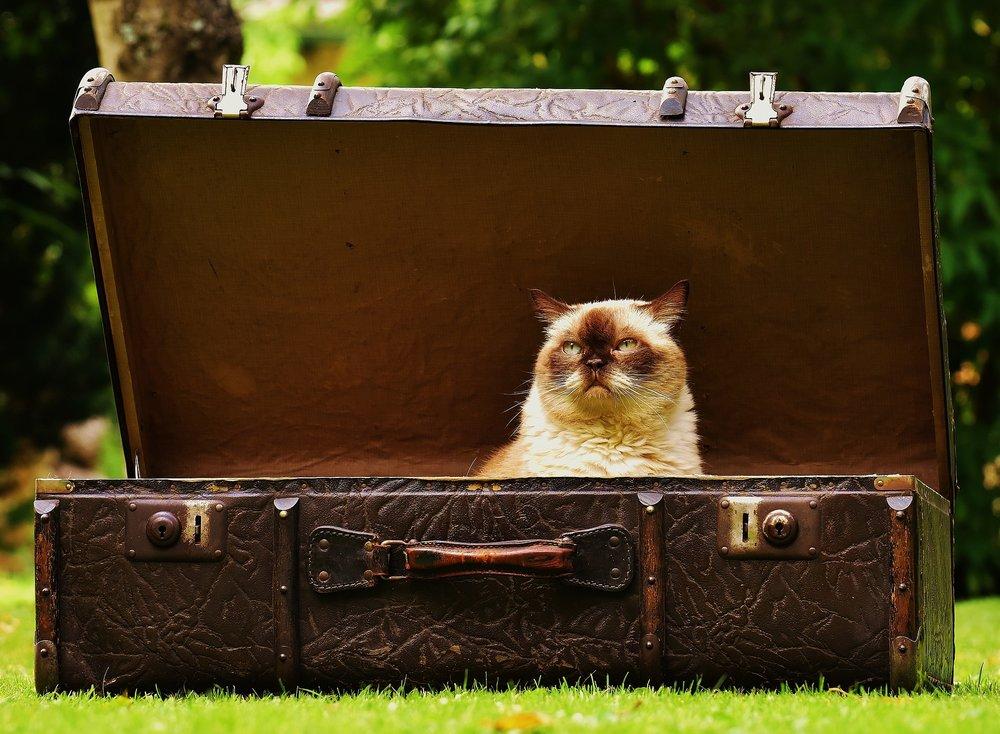 luggage-1643010_1920.jpg