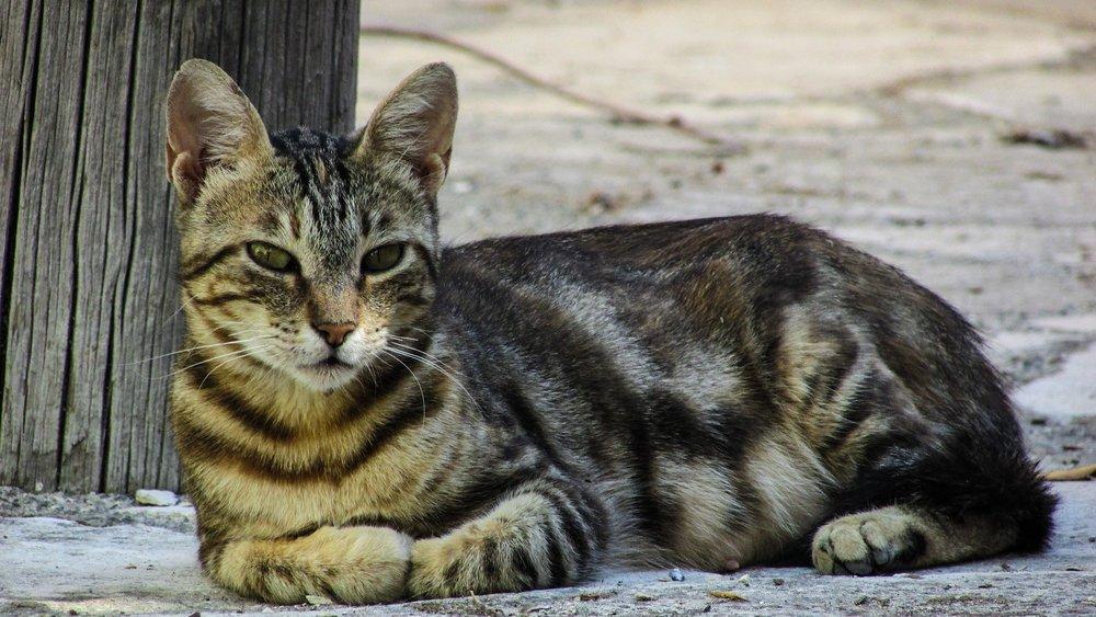 cat-1571161_1920.jpg