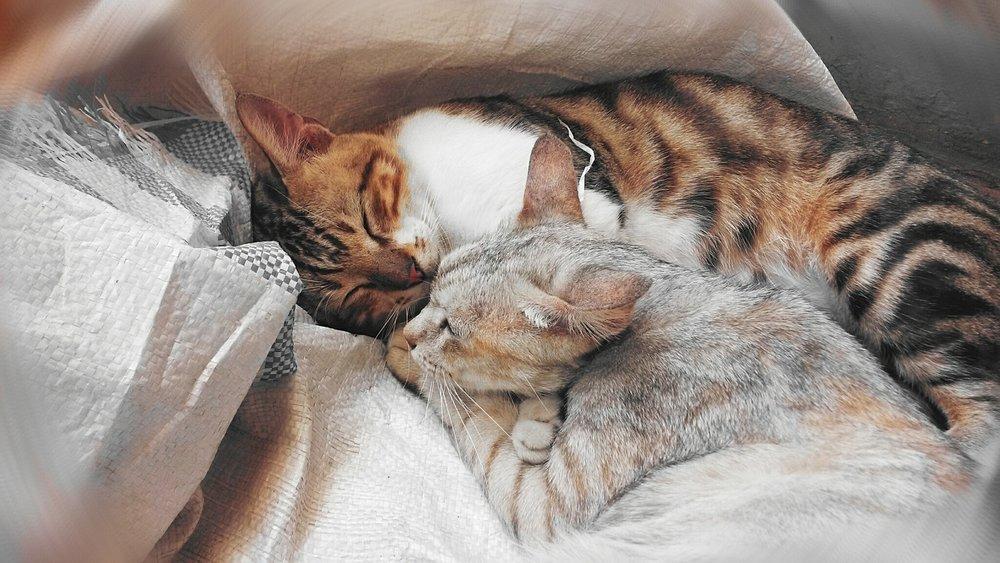 cats-443655_1280.jpg