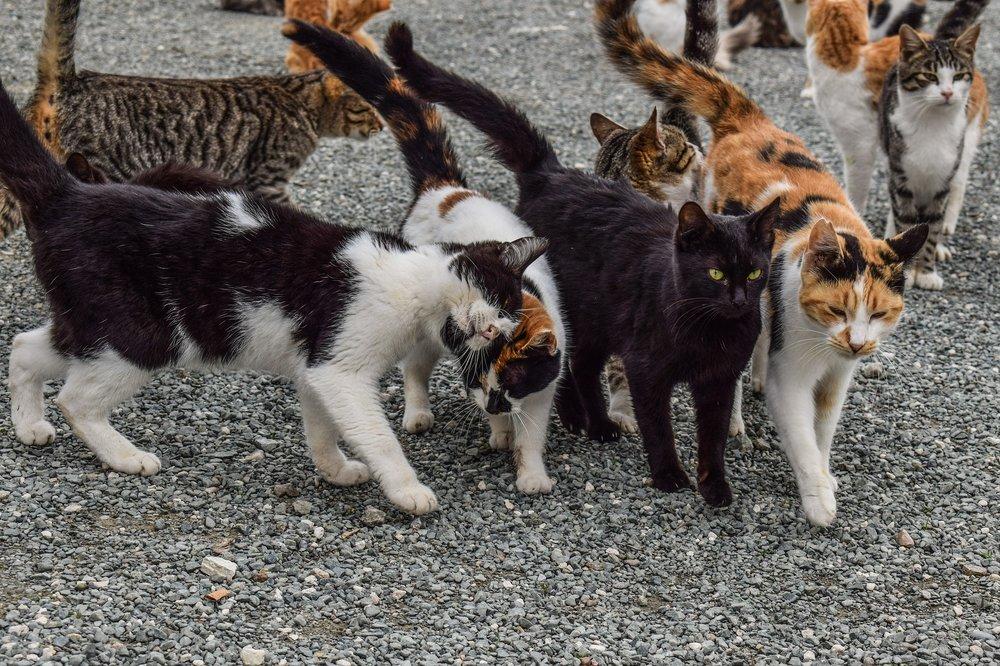 cats-2009175_1920.jpg