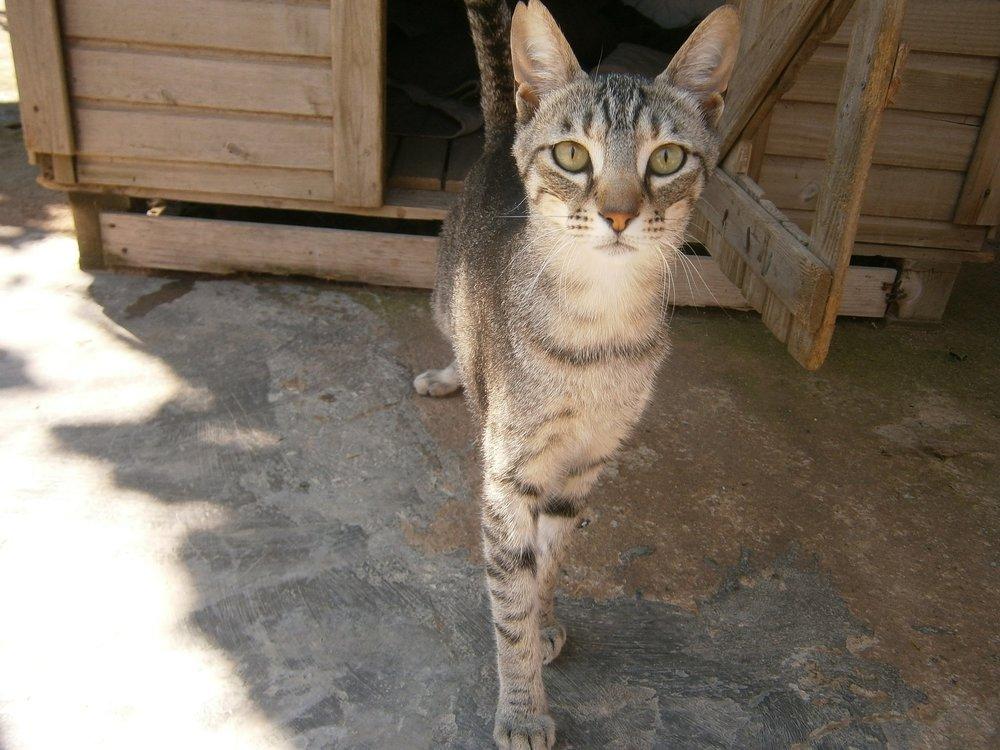 cats-995916_1920.jpg
