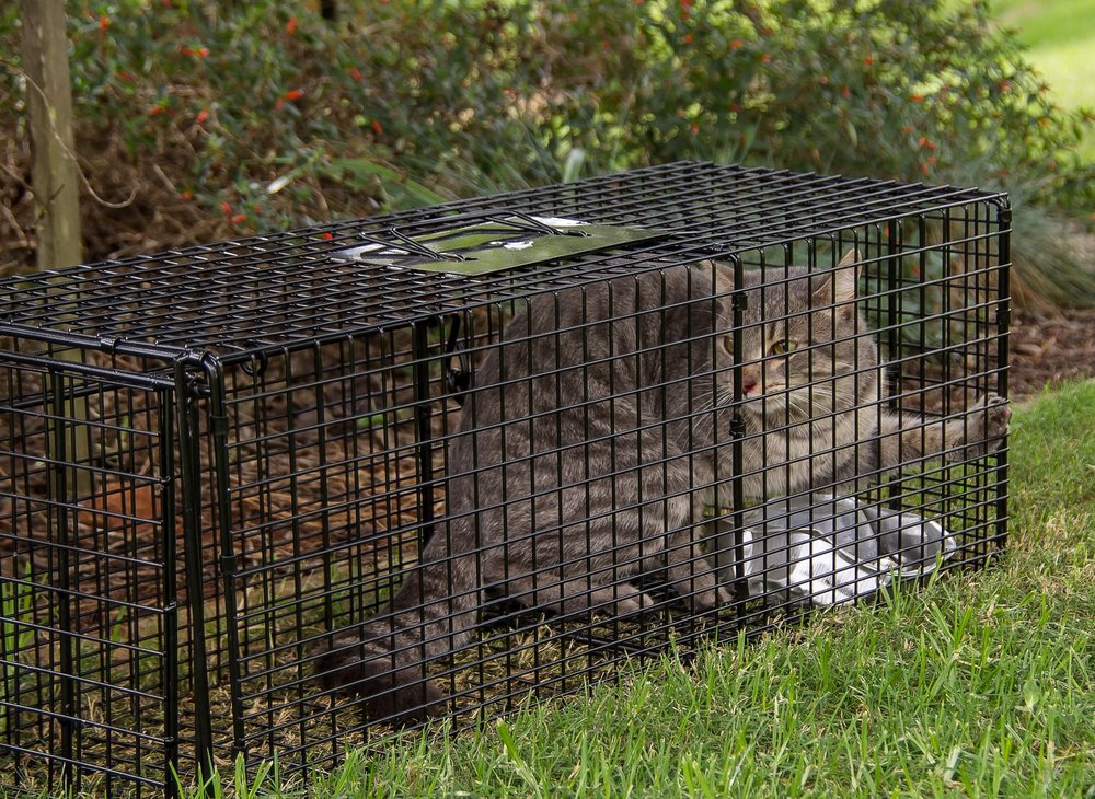 This cage also doubles as a time machine. Just kidding, but it WILL help this kitty on its way to a better, healthier future!