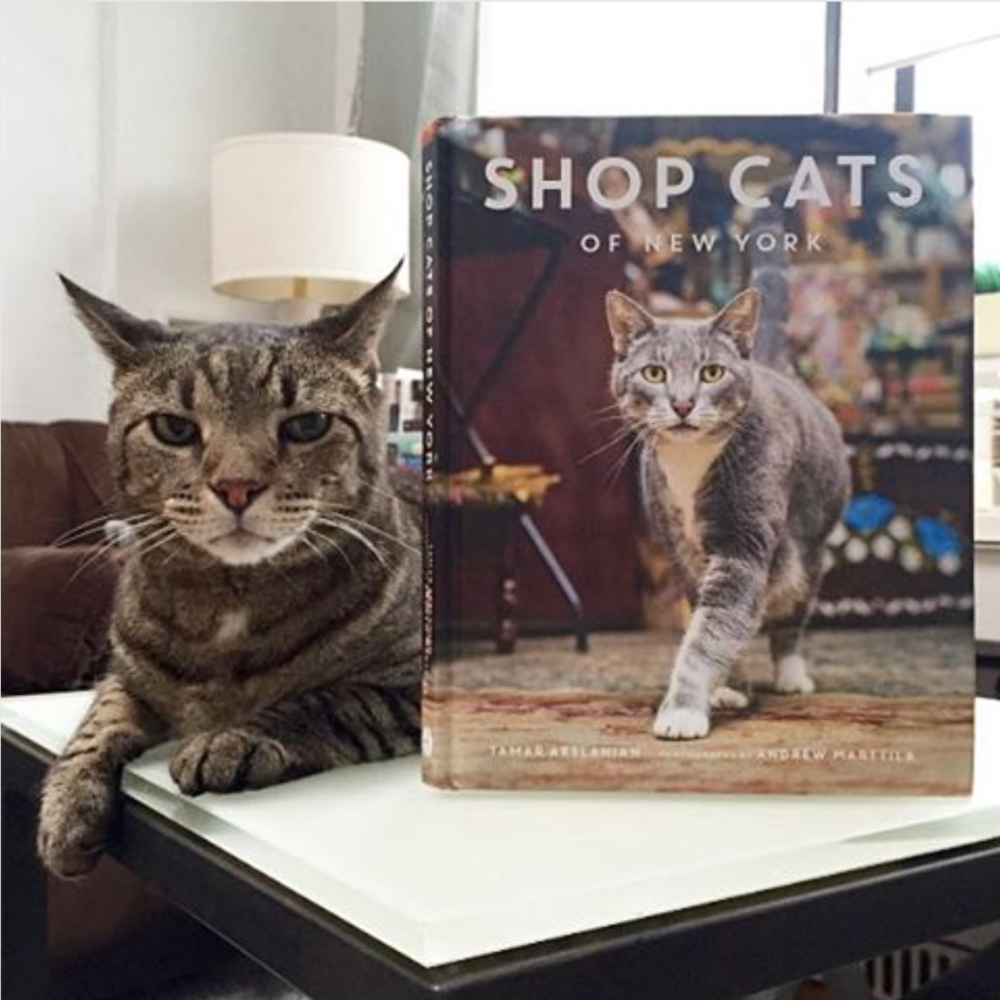 shop-cats-of-new-york-kippie-cat