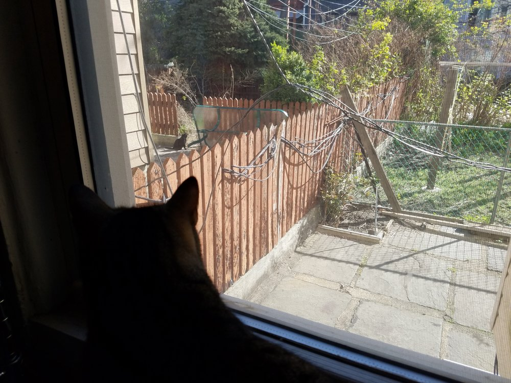 cat-inside-cat-outside
