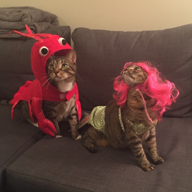 Exasperated Lobster and Portly Mermaid awaiting treat rewards!