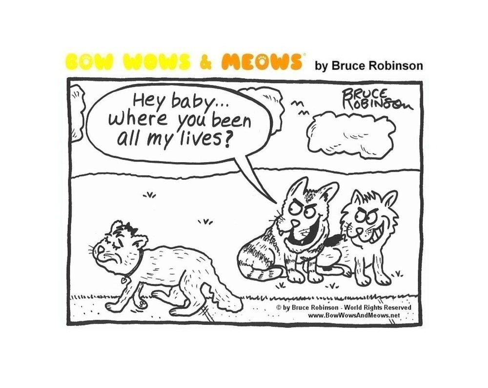 Cat pun humor.