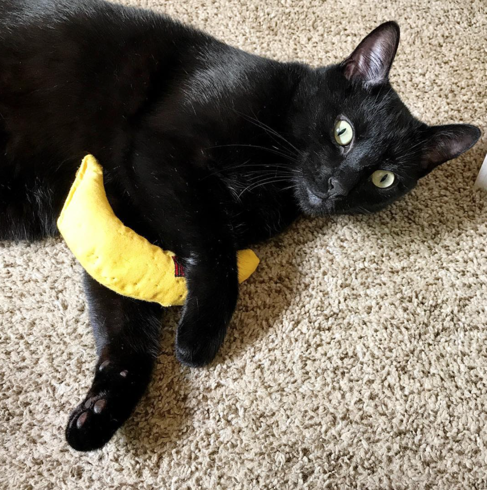 The old standby: the catnip banana #classics