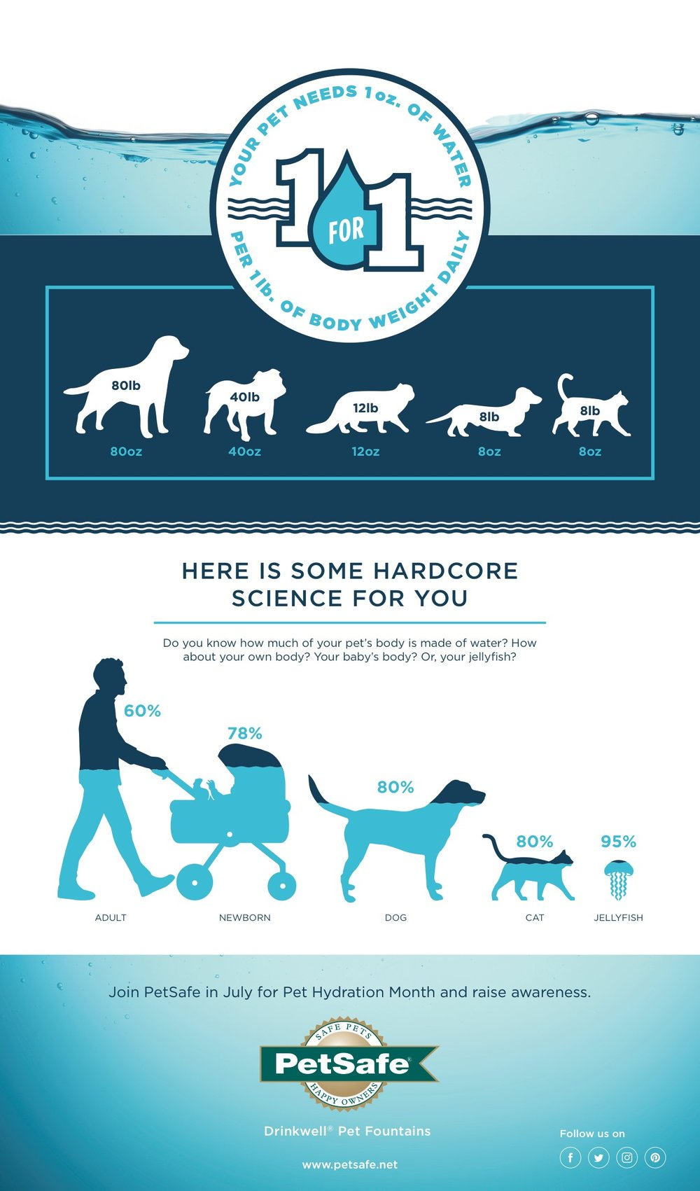petsafe-pet-hydration-month-infographic-july-that-cat-blog