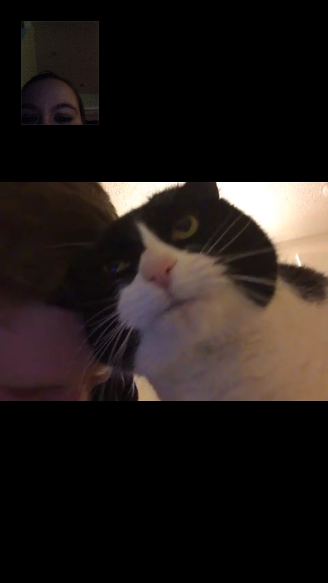 FaceTime: not just for humans.