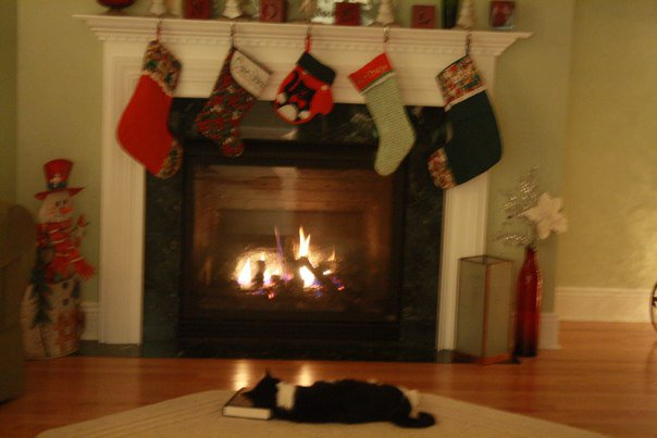 metsy-cat-sleeping-near-fireplace-christmas-stockings-that-cat-blog