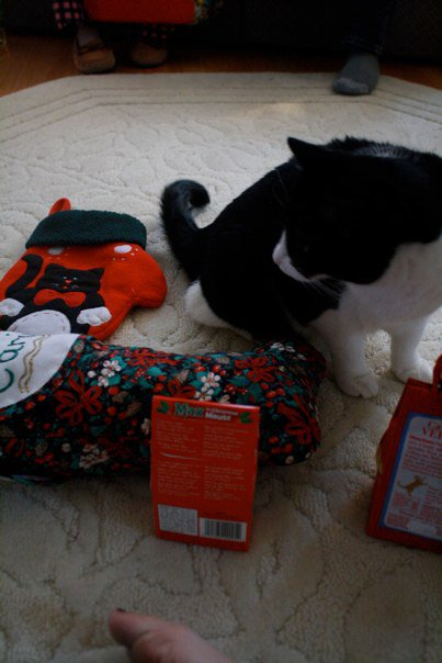 black-and-white-cat-christmas-stockings