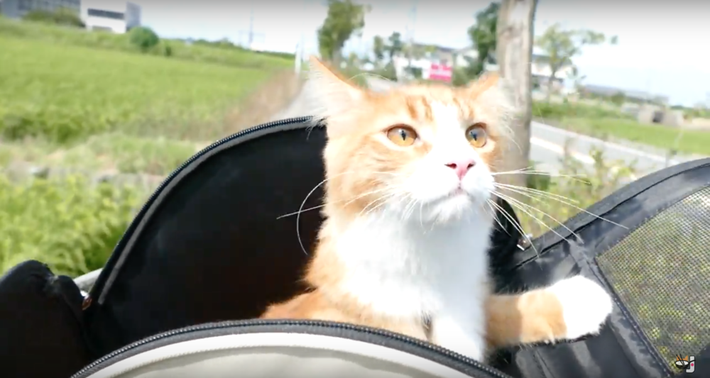 This cat's got life all figured out. / Image:  YouTube.com/user/JunsKitchen