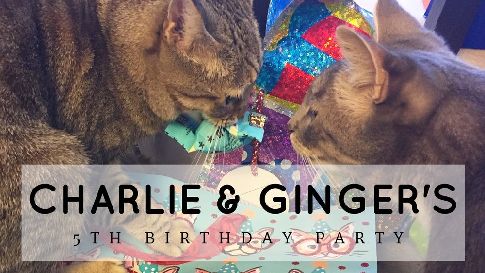 I Went To A Cats Birthday Party And It Was Everything That Cat Blog
