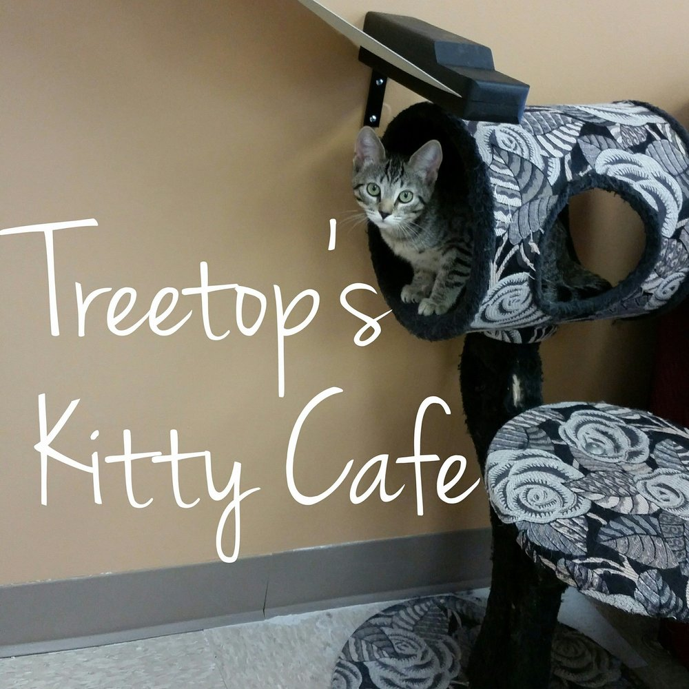 TREETOPS KITTY CAFE - 305 West State StreetKennett Square, PA 19350