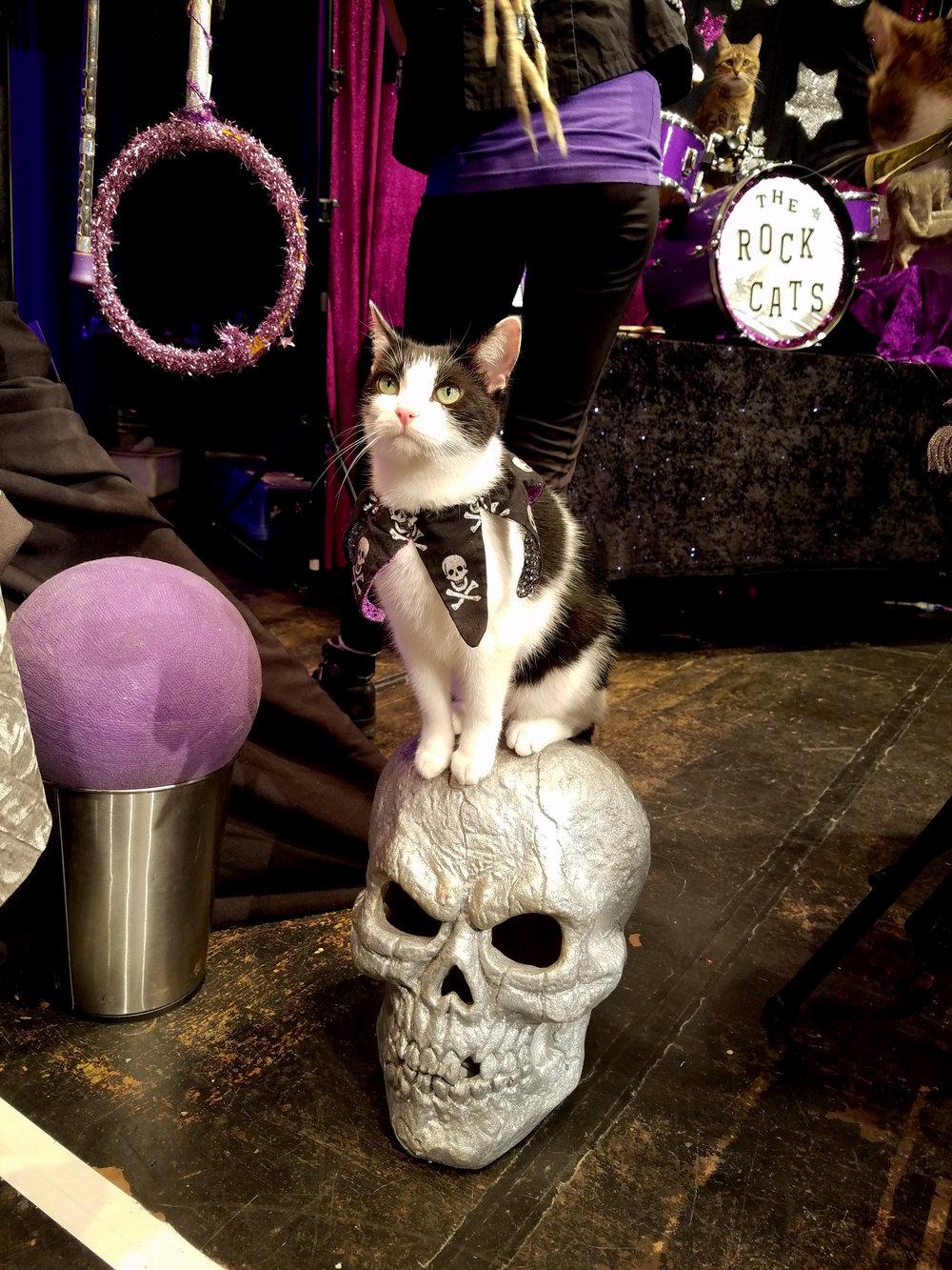 Jax on her skull.