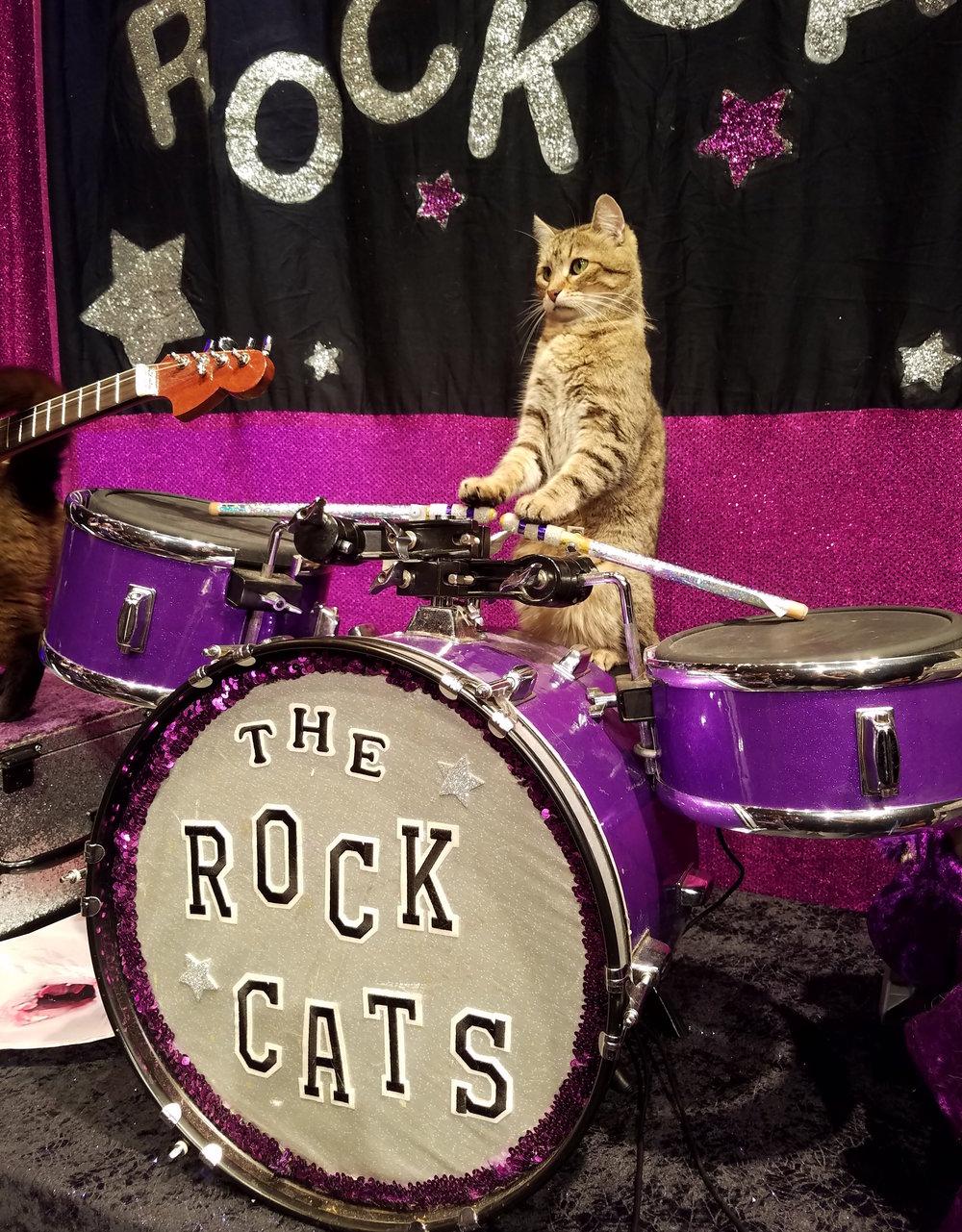 rock-cats-drummer