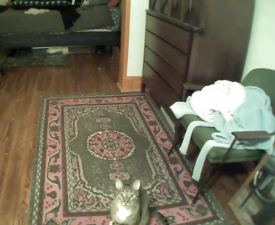 kittyo-pet-camera-that-cat-blog