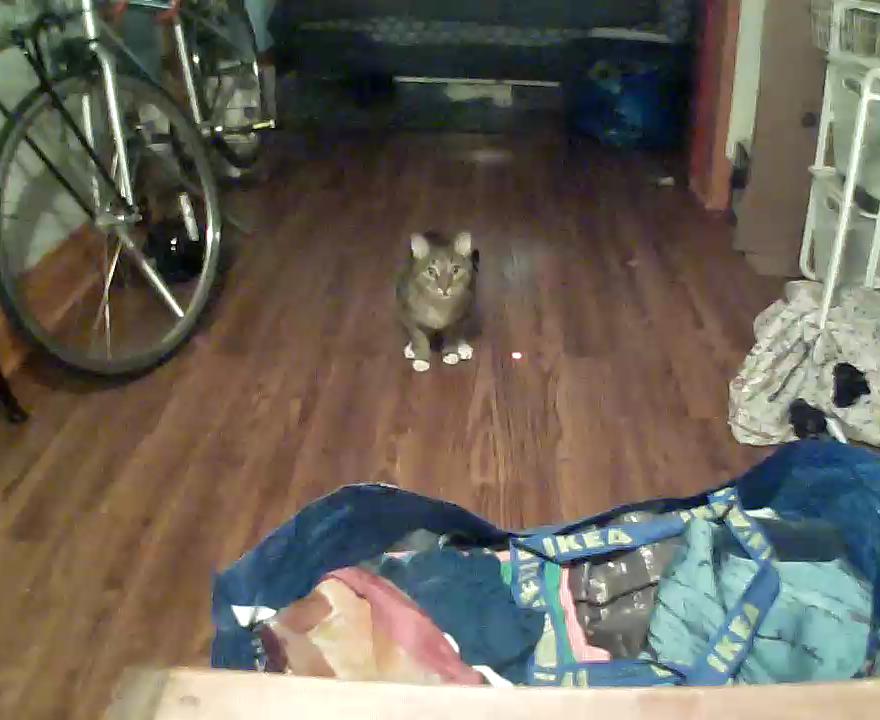 kittyo-pet-camera-that-cat-blog-2