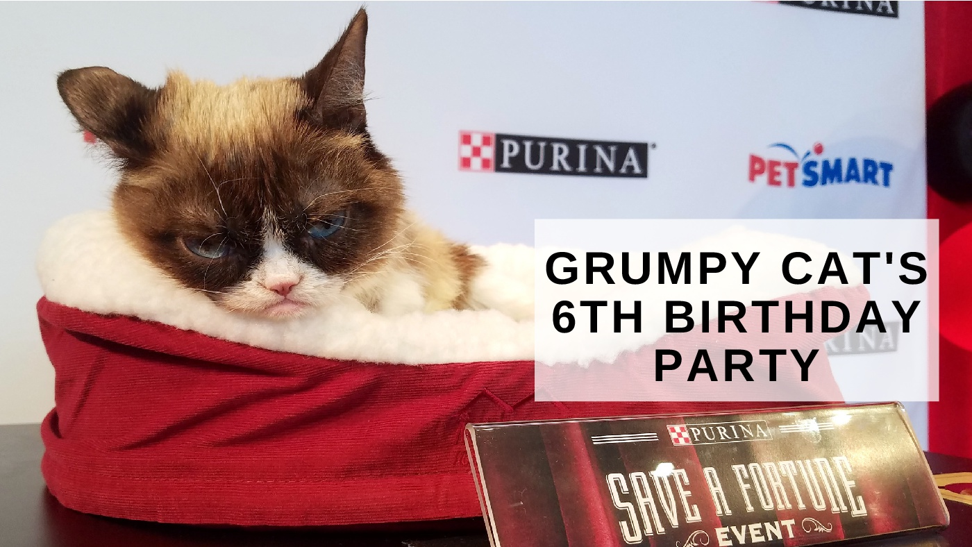 To acquire Birthday cat Grumpy picture trends
