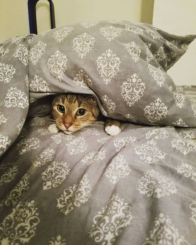 Thomas is still up in bed, hiding from that workweek like 👀  #mondayblues