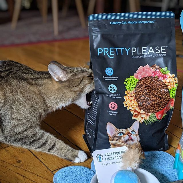 Wow, what a great mail day from our friends over at @prettylittercats! And just in time for #NationalPetDay too 😺 What a surprise, thank you so much! Thomas loves his new goodies and he couldn't wait for me to open the food bag lolz 🥳 (And btw - this post is NOT sponsored! We were so delighted to get this unexpected goodie box in the mail today. Thanks, you made our day!)