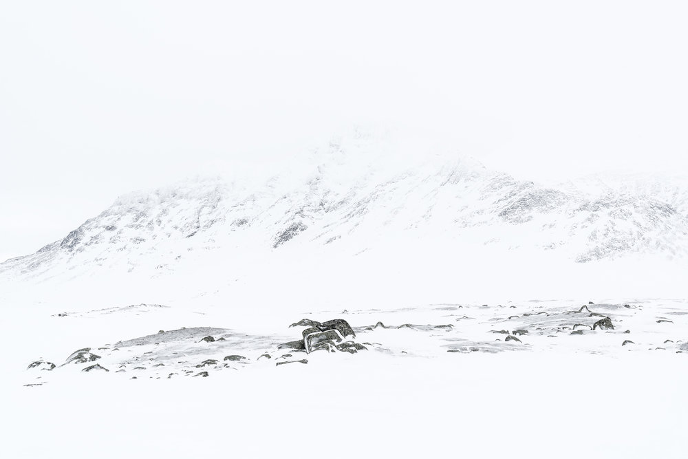 Bierikbakte in whiteout – Sarek National Park