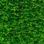 get green -