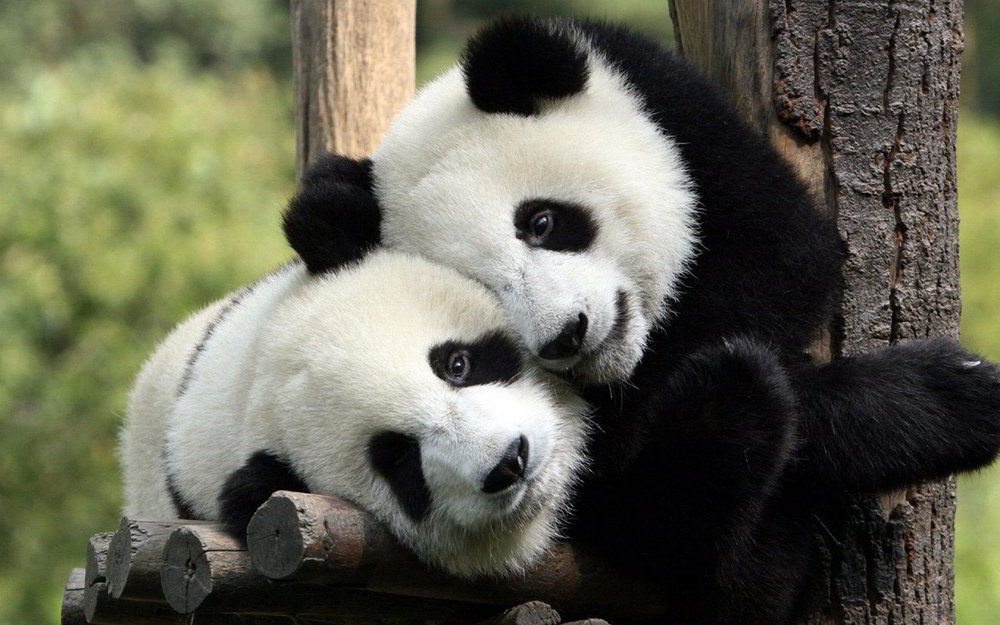 Saving Pandas - Every time you work with Property Pandas, we donate a portion of proceeds to the World Wildlife Federation (WWF) to help protect the remaining vulnerable giant panda species. Get great photos, save cute pandas ♥