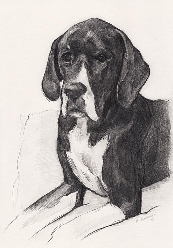 dog_pencil_portrait2_maarit_hanninen.jpg