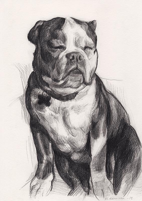 dog_pencil_portrait3_maarit_hanninen.jpg