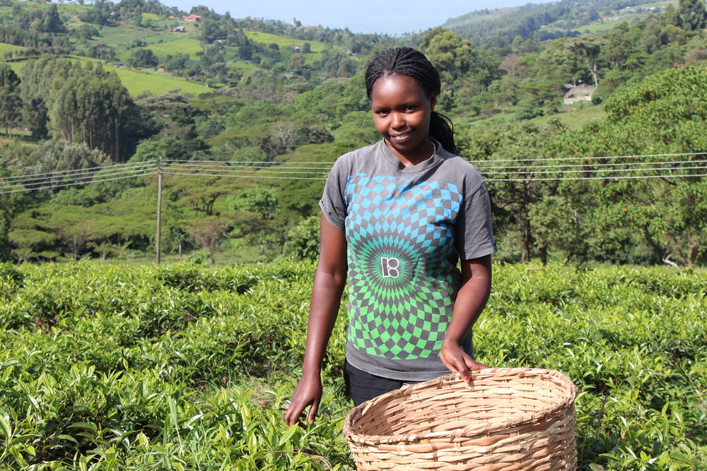 Justea - Nandi Hills, KenyaOur Kenyan teas come to us from Justea, a non-profit group that ensures the Kenyan tea growers get the best price for their amazing tea.