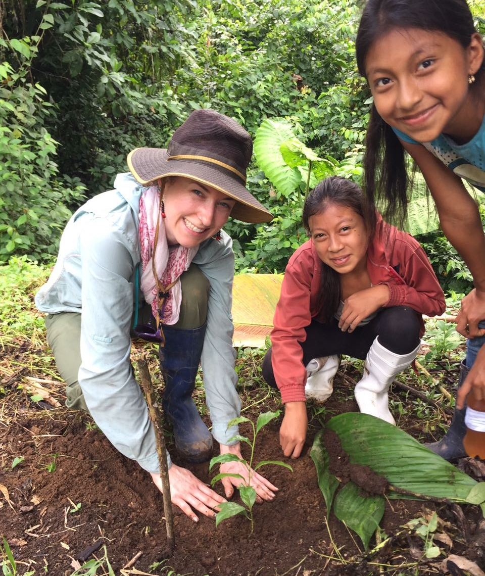- Planting baby Guayusa trees