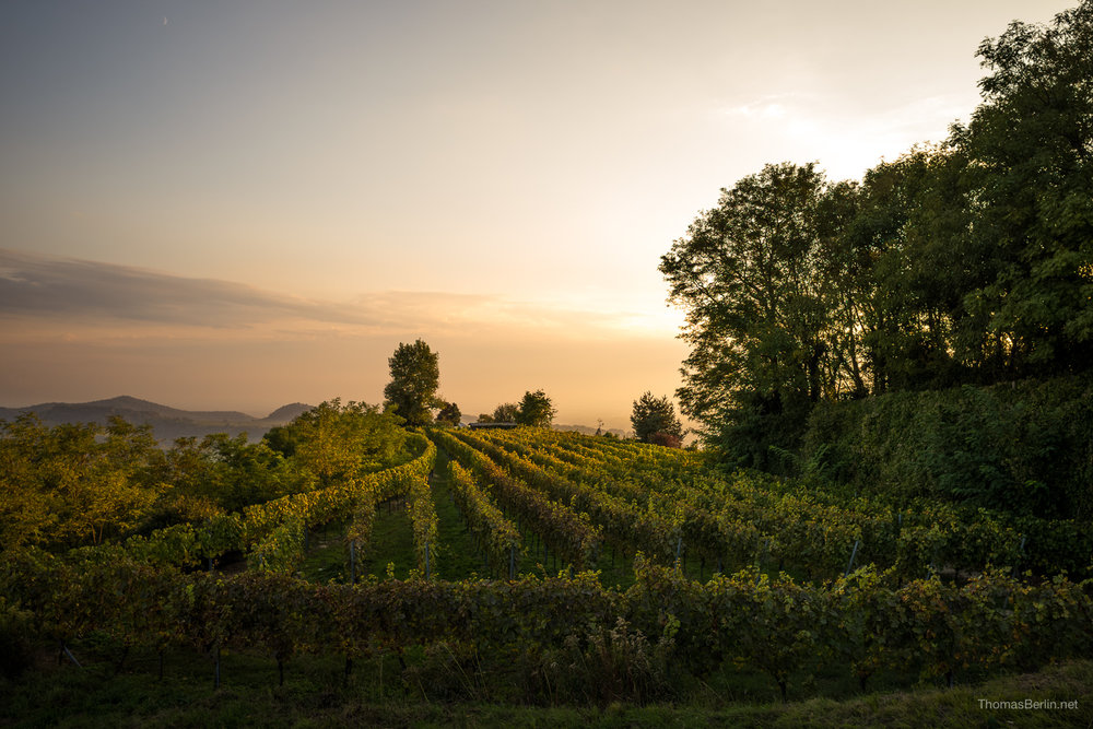 EveningVineyard_www.thomasberlin.net-5.jpg