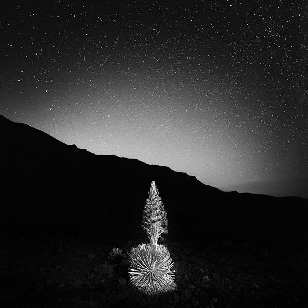 SILVERSWORD.FINAL-WEB.jpg