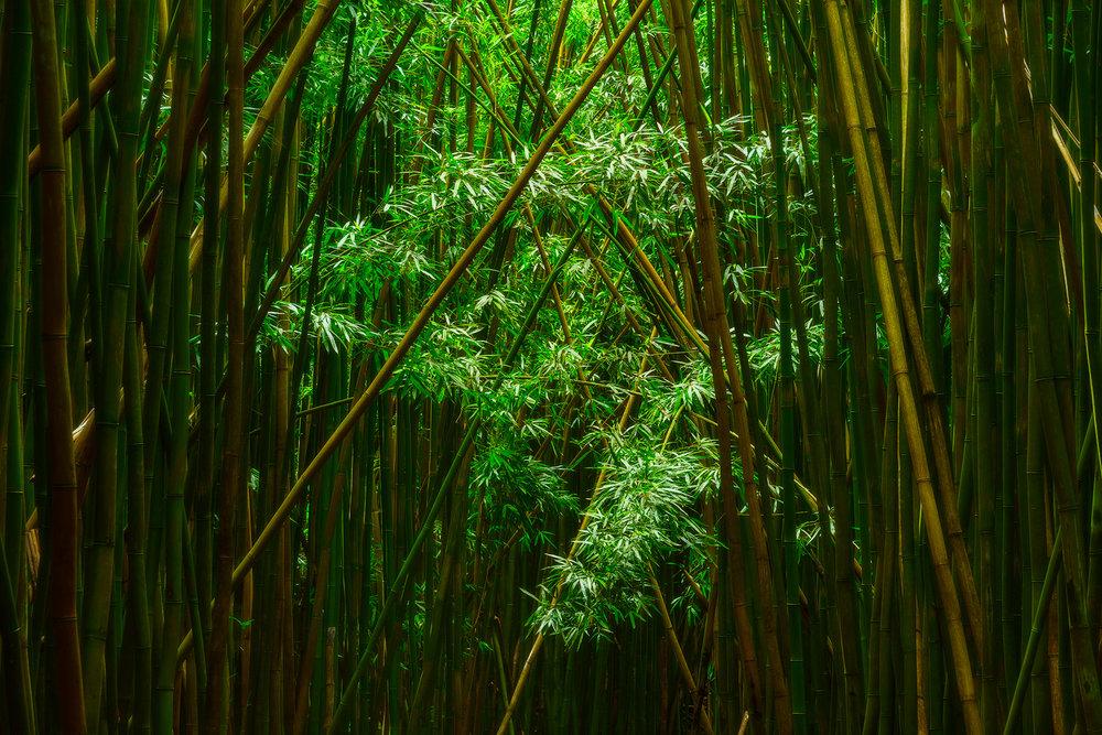 JADE FOREST.1000PX.jpg