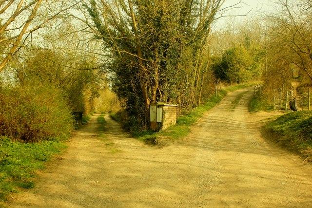 two_roads.jpg